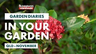 Gardening in November | Queensland | Bunnings Garden Diary