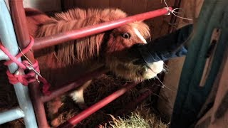 bringing-our-miniature-horse-home-day-039-02-08-19
