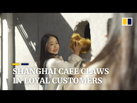 Shanghai's 'hole in the wall' cafe uses novel bear claw mitt to become a hit with customers