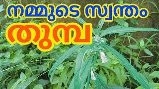 Thumba തുമ്പ യുടെ വിശേഷങ്ങൾ