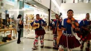 HERENCIA HUICHOL EL PASITO CHICOTEADO VIDEO OFICIAL  HD