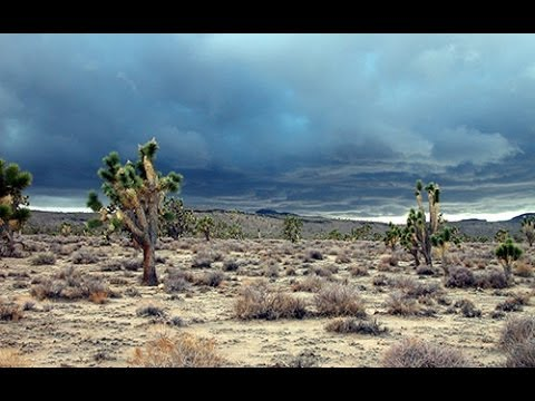 Mojave National Preserve: an Introduction
