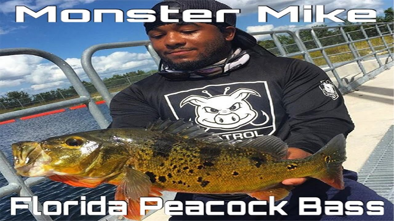 Florida Urban Peacock Bass Fishing