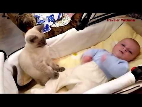 VERY SMART CAT / ОЧЕНЬ УМНЫЕ КОШКИ