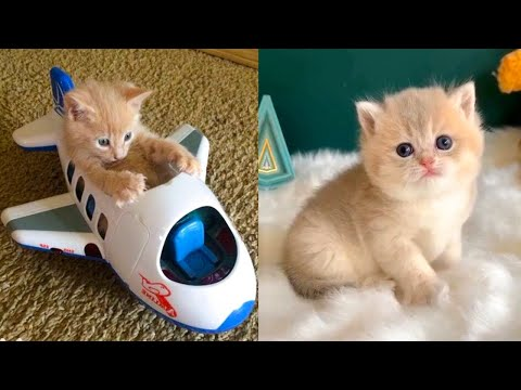 Baby Cats  Cute and Funny Cat Videos Compilation #37 | Aww Animals