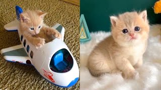 Download Baby Cats - Cute and Funny Cat Videos Compilation #37 | Aww Animals