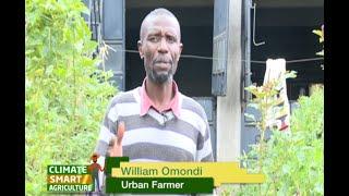 Retired Navy Officer makes a comeback through Urban farming - Part 1