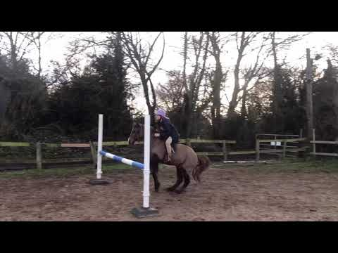 Second pony for loan with view to buy