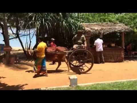 Sinhala & Tamil New Year - Avurudu Celebrations -2015
