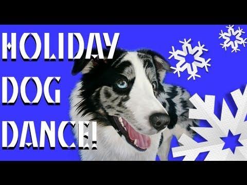 All I want for christmas- happy holidays- dog dancing tricks