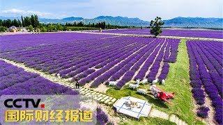 [国际财经报道]新疆伊犁河谷:烂漫花海 美景醉人| CCTV财经