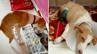 Sick Person Amputates Dog's Rear Legs In An Attempt To Become A Vet