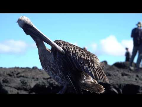 Galapagos photography on board M/Y Passion luxury cruise