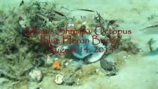 Mantis Shrimp vs Octopus