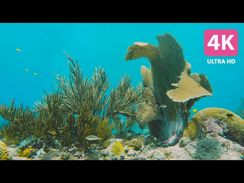 🔊🐠 Soothing Underwater Sounds of a Coral Reef - 4HRS - 4K - No  - No Distractions
