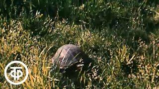 В объективе - животные. Они ведь черепахи... (1988)
