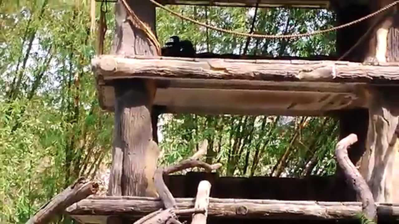 kebun binatang simalingkar