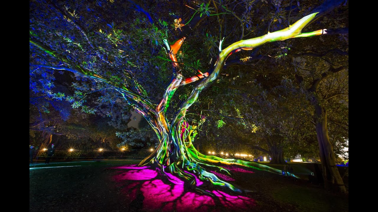 Vivid Sydney 360 Video Royale Botanic Garden Lighting Tree 2016   YouTube