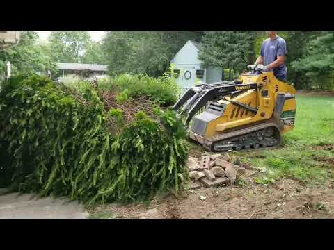 Professional Shrub Removal by Schott Services