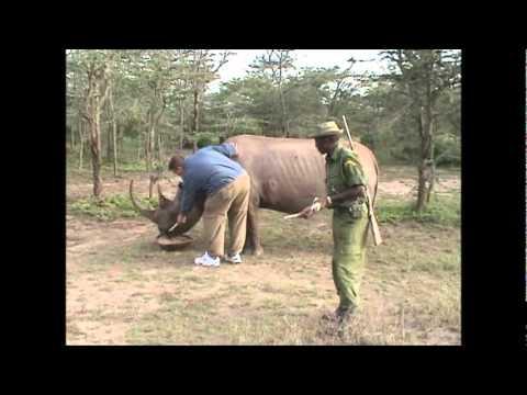 Scott Petting A Rhino In Kenya