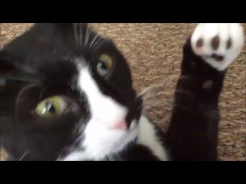 Pros And Cons Of Cats pros and cons of having a cat! - youtube