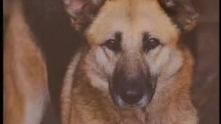 У Сумах відкрилася фотовиставка собак-мешканців притулку