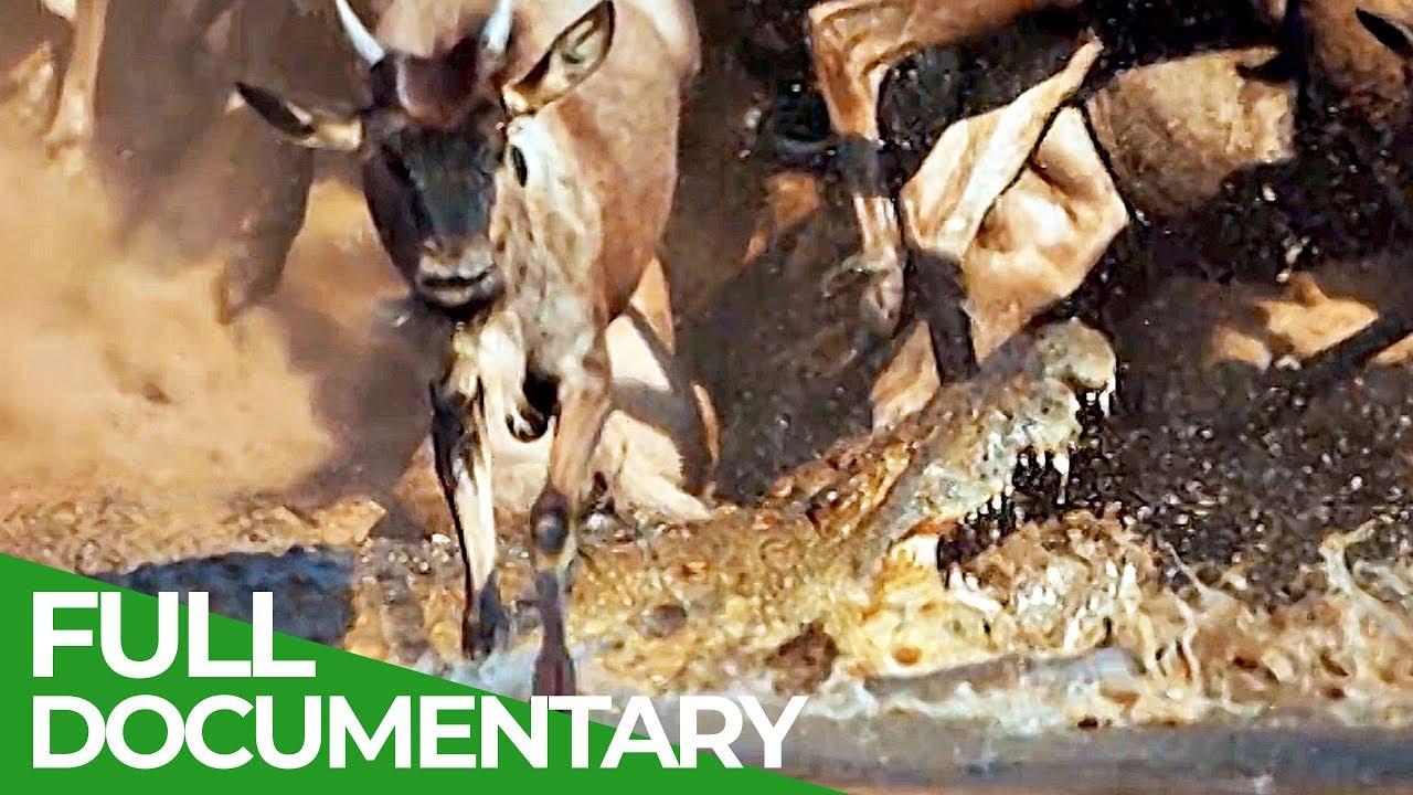 Serengeti: The Adventure | Free Documentary Nature