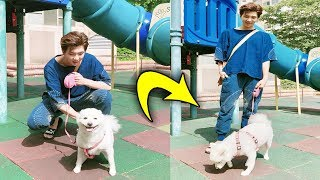 bts with animals funny moments