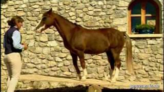 Zu Besuch Bei Pferdeausbilderin Bea Borelle