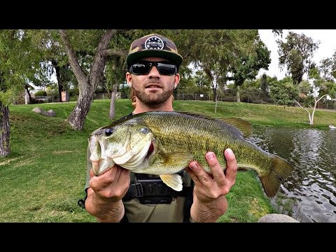 Pulling Big  Bass Out Of Thick Grass At Santee Lakes!