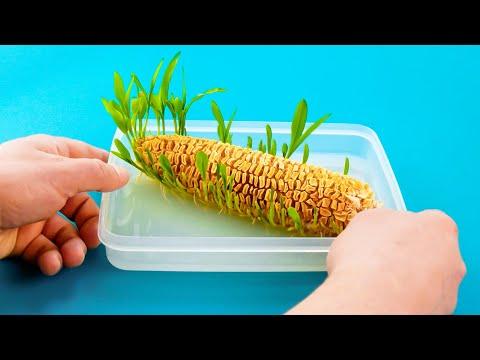 Как Выращивать Овощи и Фрукты Дома 🌱 Без Дачи и Огорода!