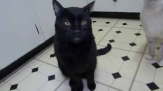 Talking Kitty 39 - Fixing a broken cat [German Fandub]