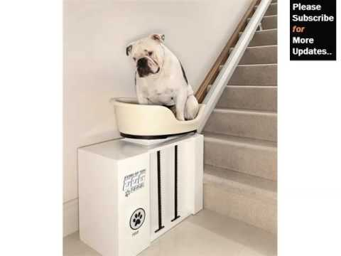 Dog Beds With Stairs Pictures And Ideas Dog Products