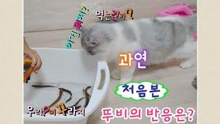 아기 고양이 입양 적응 4일차 미꾸라지를 처음 본 아기…