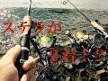 バス釣り 秋の琵琶湖でおかっぱり【ダブルステラ編】