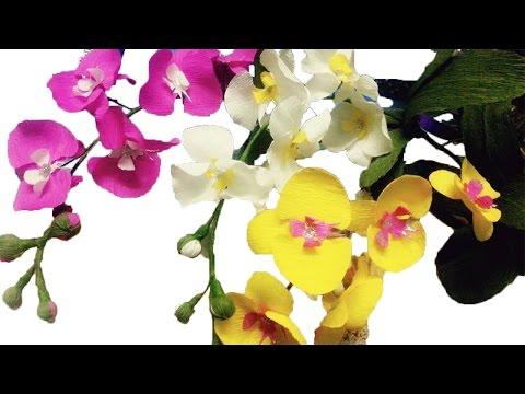 Cách làm hoa lan giấy - handmade Dzung Mac
