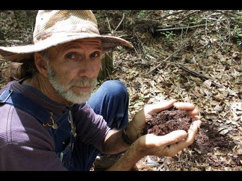 Leaf Mold ---Living Off the Land