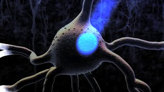 Neurons Neurotransmitters Nervous System And Brain 3D Animation - Instrumental Music Relax