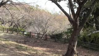 二宮、吾妻山公園ぶらり散歩I stroll in Ninomiya, Kanagawa, Mount Azuma Park aimlessly
