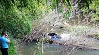 Mont-de-Marsan : une vache de course landaise s'échappe de l'abattoir