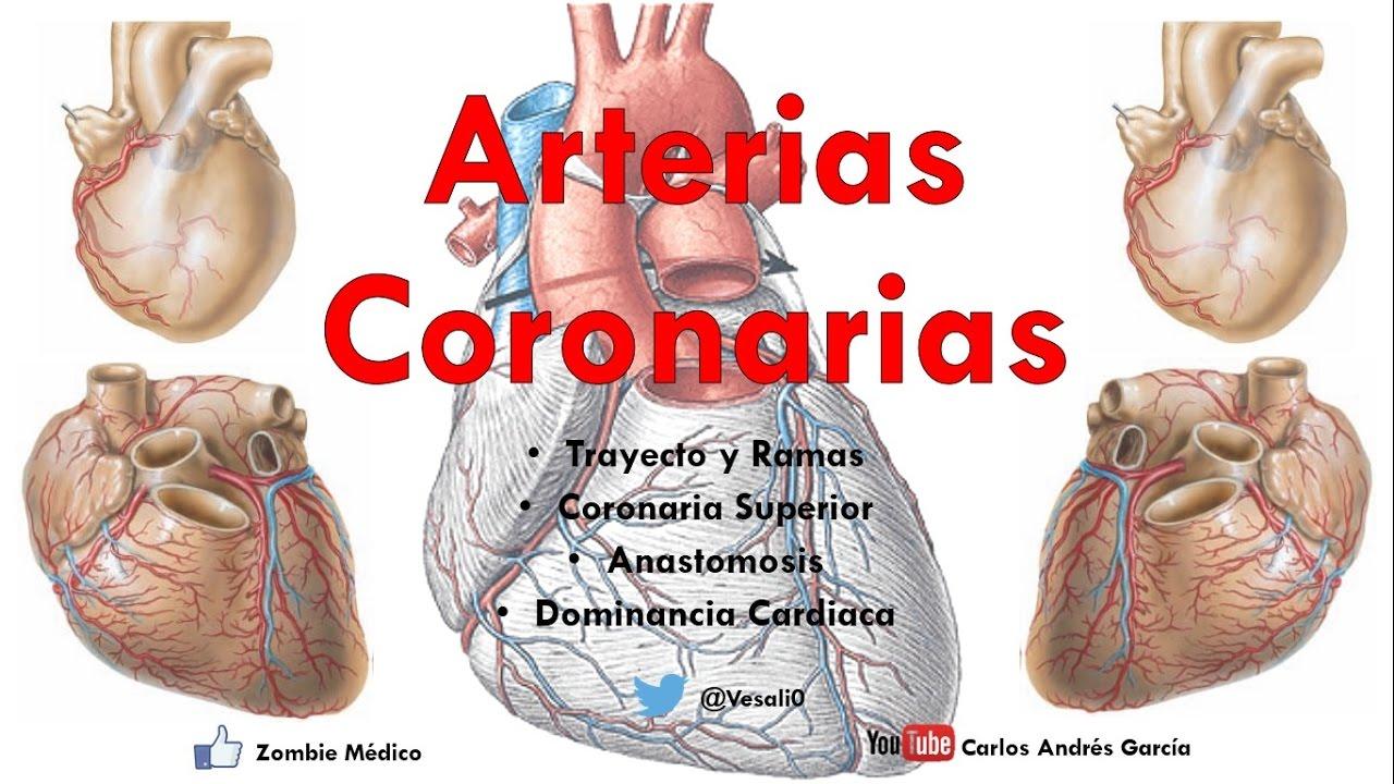 Anatomía - Irrigación del Corazón (Dominancia, Codominancia ...