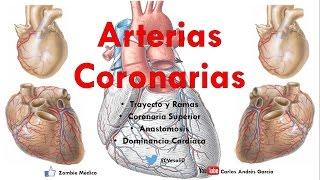 Anatomía - Irrigación del Corazón (Dominancia, Codominancia, Anastomosis Coronaria)