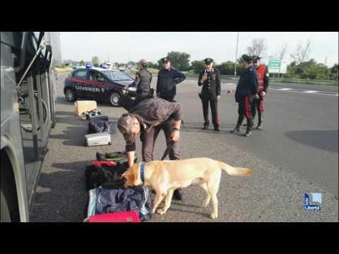 Gita rovinata, cani antidroga trovano marijuana e hashish su pullman di studenti: 4 segnalati