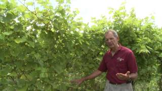 Coastal Vineyards: Hand-Crafted From Vine to Glass