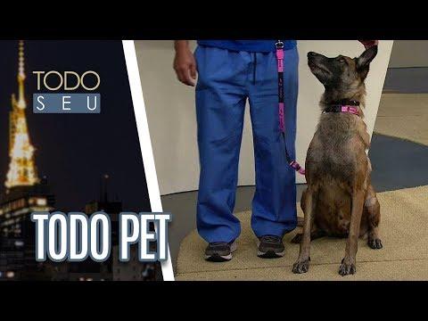 Veterinário Mário Marcondes Fala Sobre Adestramento Dos Pets - Todo Seu (15/06/18)