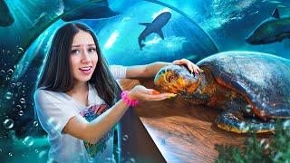 КОРМИМ ЧЕРЕПАХ Океанариум и Зоопарк Кипр Elli Di Pets
