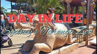 Day in Life | Visiting Taronga Zoo | Indian NRI family