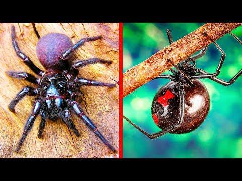I 9 Ragni Più Pericolosi Del Mondo