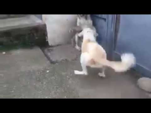 Mom protect her puppies from dad