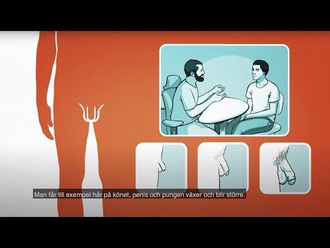 Male genitals | RFSU informerar om penis pung / mannens kön på engelska